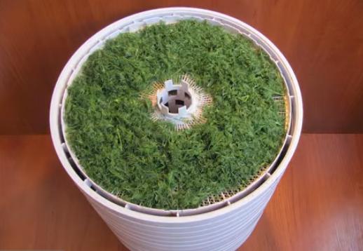 лук на зелень в домашних условиях зимой