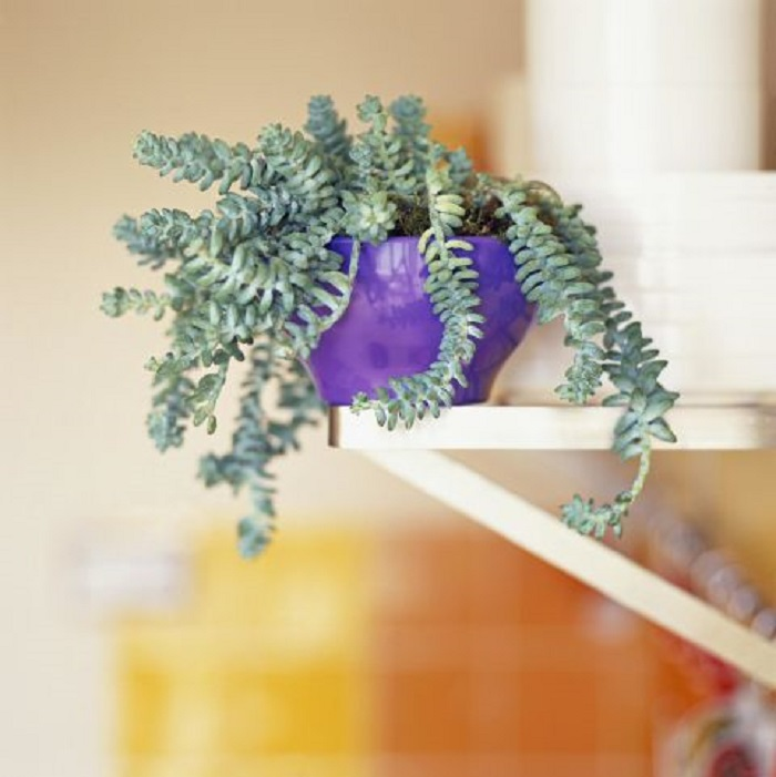 12 дивных комнатных растений, о которых ты еще не знаешь! Мечтаю о № 7.